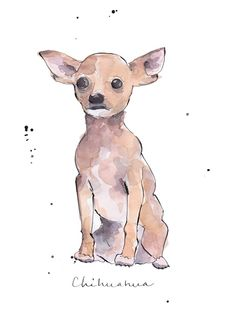 Chihuahua illustration See it on http://www.benedictecaillat.com/en/portfolio# and on http://illustrationfriday.com