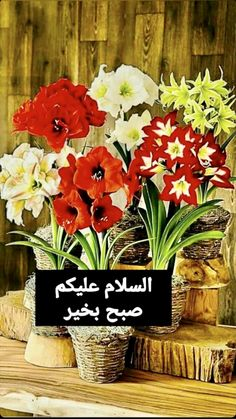 Good Morning Beautiful Gif, Plants, Plant, Planets