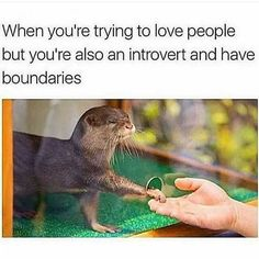 130 Funny Memes That Will Make Every Introvert Laugh Out Loud - - Humor Memes Humor, Funny Memes, Jokes, Funniest Memes, Humor Videos, Funny Gifs, Videos Funny, 9gag Funny, Dark Souls