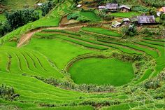 Lao Cai enhances agricultural product quality for tourists