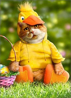 Cat In Duck Costume Funny Easter Card Avanti Press  http://www.amazon.com/gp/product/B007GO3FXM/ref=as_li_ss_tl?ie=UTF8&linkCode=ll1&tag=pieofscr0f-20&linkId=beb578c9ed7cf110071788db56f488b2