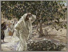 """Jesus Curses the Fig Tree. BIBLE SCRIPTURE: Mark 11:14, """"And Jesus answered and said unto it, No man eat fruit of thee hereafter for ever. And his disciples heard it."""" - http://access-jesus.com/Mark/Mark_11.html"""
