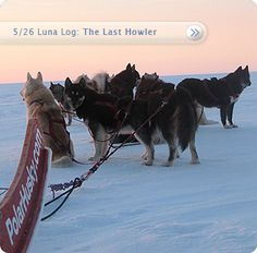 PolarHusky.com This site chronicles the dogsledding expeditions made especially to educate the children of the world