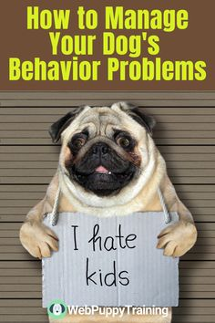 Are you stressed out by your dog's bad behaviors? Know some of the simple things you can do to manage the situation with some dog training obedience methods. #howtocorrectbaddogbehavior #stopbaddogbehavior Puppy Training Tips, Potty Training, Training Your Dog, Puppy Barking, Dog Potty, Dog Training Techniques, Best Puppies, Dog Behavior, Simple Things