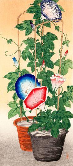 TAKAHASHI Shotei (1871~1945), Japan, woodblock print