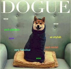 Doge: The Best Of The Doge Meme
