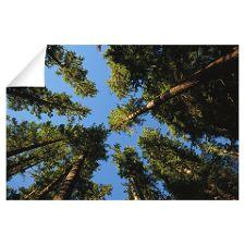 Strathcona Provincial Park, Vancouver Island, Brit Park Lodge, Outdoor Education, Education Center, Vancouver Island, Workspaces, Pattern Art, Centre, Explore, Exploring
