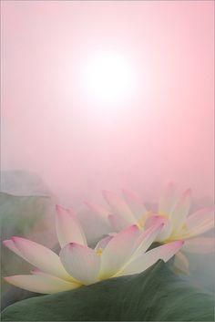 White Lotus flower Surreal Series -  DD0A9526-1-1000 by Bahman Farzad, via Flickr