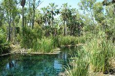 Mataranka, Northern Territory, Australia has two sets of natural hot springs. Bitter Springs & Rainbow Springs. More: http://www.pinterest.com/deyzel