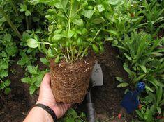 Nap, Garden, Plants, Garten, Lawn And Garden, Gardens, Plant, Gardening, Outdoor