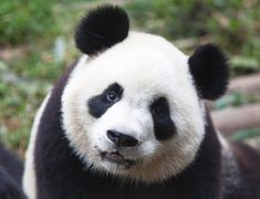 How Google's Panda 4.1 May Affect You | Boostability Blog