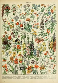Love these colours - Adolphe Millot - Illustration for the article on flowers (fleurs) in Nouveau Larousse illustré, 1898-1904. This is one of four plates. Large HQ. Click on the image and read it online.