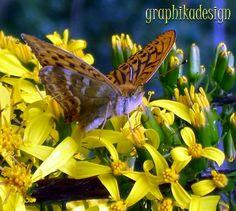 Portfolio Multimedeia: Lähikuvassa luonto: pitkäkärsäiset perhoset, ja tietysti leppäkertut