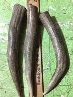 Deer Antlers Tips Knife Handles  Jewelry Craft Mule Deer Elk Moose 231