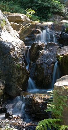 Garvan Gardens, Hot Springs, AR