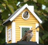 Multiholk White Cottage is a combination feeder and nest box. Buy online or locate your nearest retailer. Bird Nesting Box, Nesting Boxes, Bird Tables, Mountain Cottage, Yellow Cottage, Grey Houses, Bird Boxes, Wooden Bird, Small Birds