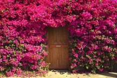 25 Beautiful Front Doors That Leads To A Happy Home Purple Flower Pictures, Pink And Purple Flowers, Pretty Flowers, Bright Pink, Unique Front Doors, Beautiful Front Doors, Secret Garden Door, Garden Doors, Garden Gate