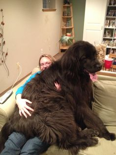 """Newfie cuddle...""  I LOVE that the pinner posted this!!"