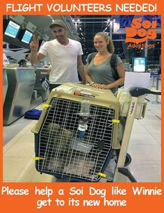 Please consider being a flight volunteer, as it costs you nothing on top of your booked flights and you too can do a good deed - just like the wonderful couple in the photo who took Winnie on their flight back to Florida recently. If you are traveling on booked tickets with Special conditions do apply for the EU: a minimum of 4 months notice on pre booked flights to any part of the EU are required. Please contact jan@soidog-foundation.org for more information.