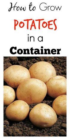 #Gardening : Small space potato growing
