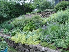 steep slope landscape planting - traditional - landscape - boston - by vdhdesign