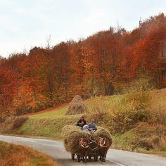 Pitoresc până la ultimul pixel! Mulțumim @oannriz pentru tabloul #maramureșean Wonderful Places, Beautiful Places, Country Life, Country Roads, Visit Romania, Bucharest Romania, World Cultures, Travel, Traditional