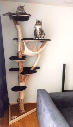 Cool Cat Trees, Diy Cat Tree, I Love Cats, Cool Cats, Cat Tree Designs, Living With Cats, Cat Activity, Cat Run, Cat Condo