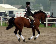 Equitazione, doppietta italiana nel Gp di Montecarlo a cura di Redazione - http://www.vivicasagiove.it/notizie/equitazione-doppietta-italiana-nel-gp-montecarlo/