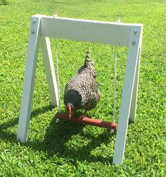 This handmade chicken swing set is white with white rope and a red seat. It's low enough to the ground that chickens can hop on and off. It comes from Etsy shop The Chicken Network and is built by the Amish. Chicken Swing, Cute Chicken Coops, Diy Chicken Coop Plans, Chicken Pen, Chicken Garden, Backyard Chicken Coops, Chickens Backyard, Chicken Coop Decor, Diy Chicken Toys