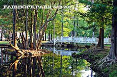 Languid pond of reflection at Fairhope Park early morning - by SFG