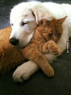 This cat finally trust this puppy enough to have some cuddles.