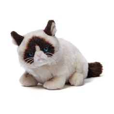 Grumpy Cat plush doll.  Just as cute as the real thing.