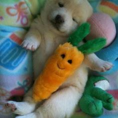 20 Puppies Cuddling With Their Stuffed Animals During Nap Time What do you little puppies dream of.when you take your little puppy snooze? Animals And Pets, Baby Animals, Funny Animals, Cute Animals, Little Puppies, Cute Puppies, Cute Dogs, Dog Pictures, Animal Pictures