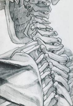 Skeleton Studies by James Julier