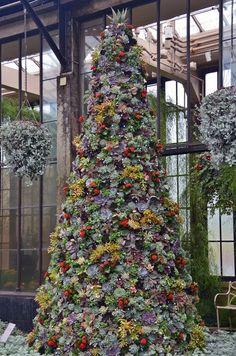 Ez a 2000 pozsgásból készült karácsonyfa a kedvencünk idén - kert.tv