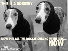~ Greyhounds Love Their Snacks~
