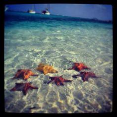 Star fish. San Blas Island. Panamá.