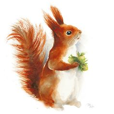 Woodland Squirrel watercolor painting - print. Nursery Animal Illustration. Red…