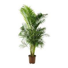 10 eksempler p luftrensende gr nne planter og blomster i hjemmet planter til at rense luften. Black Bedroom Furniture Sets. Home Design Ideas