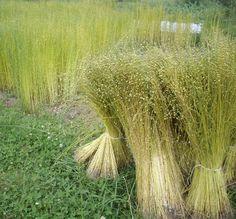 spinning flax | Advanced Enterprise Behavioral Biometrics