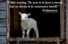 Great collections of Vegetarian Quotes and Sayings - Good Vegetarian Thoughts, Messages with images to promote vegetarian and stop killing of animal. Vegetarian Quotes, Vegan Quotes, Vegetarian Lifestyle, Vegan Vegetarian, Pancakes Protein, Protein Dinner, Vegan Memes, Why Vegan, Vegan Animals