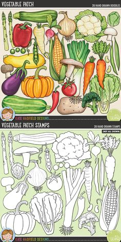 Vegetable clip art for teachers! Contains coloured clipart and black and white outlines at 300 dpi for highest quality printing for your resources and projects! Hand-drawn clip art by Kate Hadfield Designs at Teachers Pay Teachers. Decoration Creche, Vegetable Drawing, Vegetable Illustration, Ecole Art, Printable Crafts, Food Drawing, Food Illustrations, Digital Scrapbooking, Digital Papers
