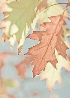 Pastel colours are used moreso for spring, but the leaves look quite old and therefore would have been taken in autumn Soft Colors, Pastel Colors, Paint Colors, Autumn Colours, Accent Colors, Soft Autumn, Autumn Leaves, Color Concept, Peach And Green