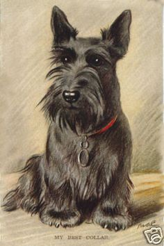 Scottish terrier illustration