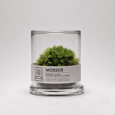 The Mosser is a small glass terrarium filled with a simple round moss ball. The Mosser comes with a glass mister bottle used to feed your plant. They are very easy to care for and only need to be sprayed once every two weeks with filtered water. $26