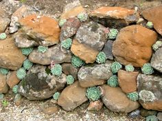 succulents planted in a stone wall - built a small wall with your special rocks and fill gaps with plants