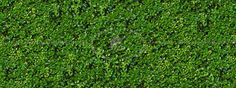 Green hedge texture seamless 13100