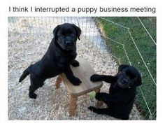 50 Best Funny Animal Memes - Page 3