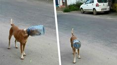 Heartless people attach bottle on dog's face in Munnar, India! Sign Now! | YouSignAnimals.org