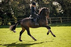 Equestrian ~ wow I need this horse